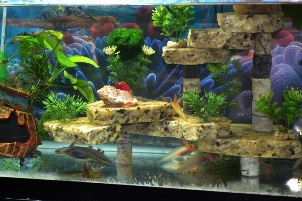 Axolotl Aquarium Google Zoeken Aquascaping Pinterest Axolotl Aquariums And Aquarium Ideas
