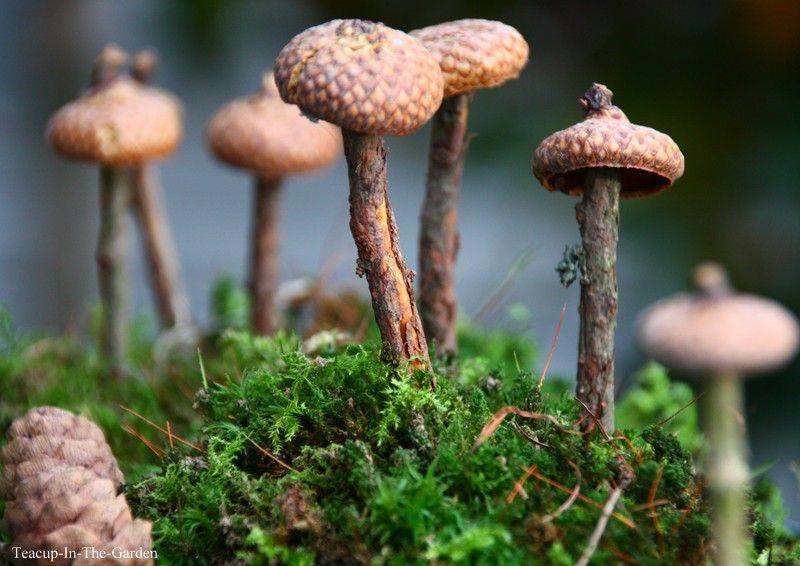 Am Wochenende war ich in Bastel-Laune. Und schaut mal, was ich in der neuen Daphne's Diary gefunden habe!   Ich fand diese Pilze so süß,... #woodcrafts
