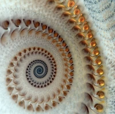 Fractal shell spiral~just allows us a glimpse of God's greatness!