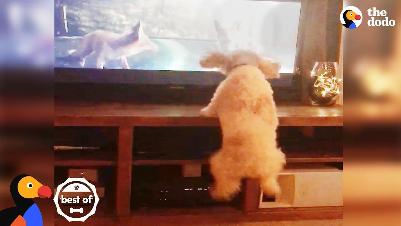 Dog Jumps With Animals On Tv Funny Cute Videos April 2018