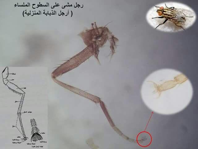 رجل مشي علي اسطح ملساء Al Qaeda