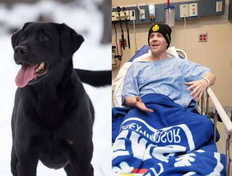 Hero Police Officer Rescues Dog From Frozen Creek Rescue