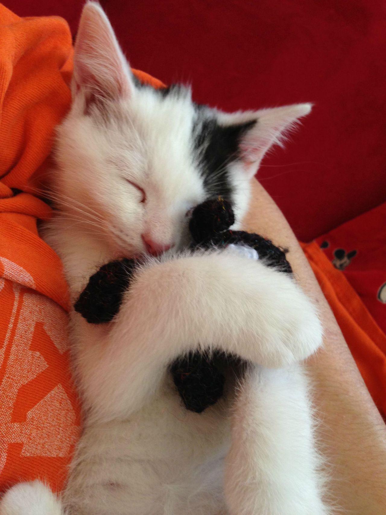 My Kitten Fell Asleep Hugging His Favorite Stuffed Animal Pets Cuddling Cute Little Kittens Cute Animals