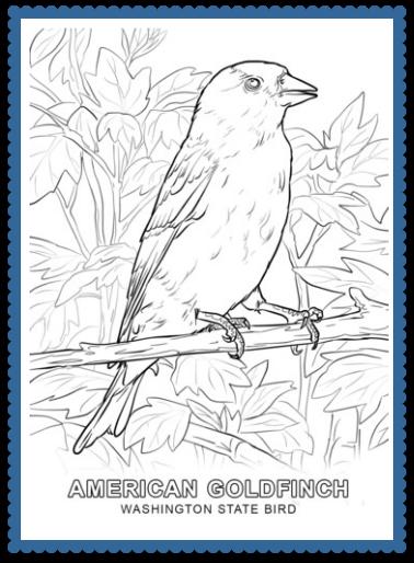 Washington State Bird Coloring Page