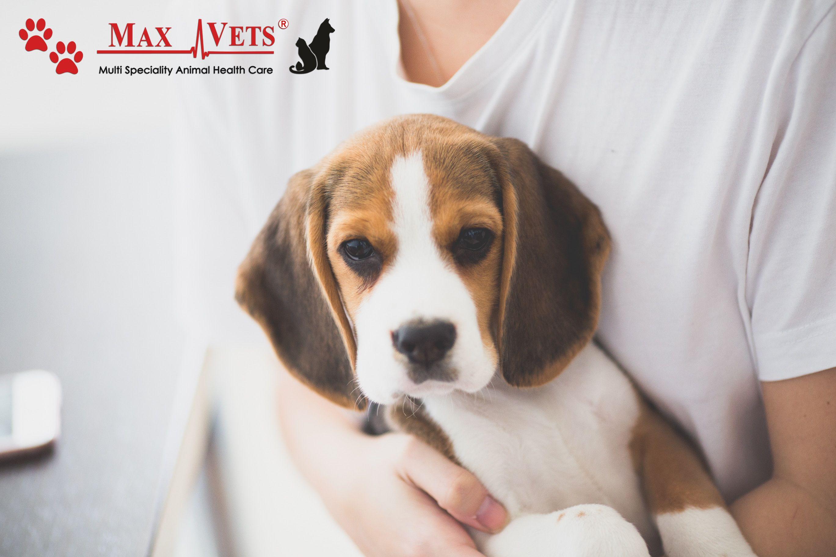 Come To Max Vets Pet Hospital In Newdelhi Delhi For Premier