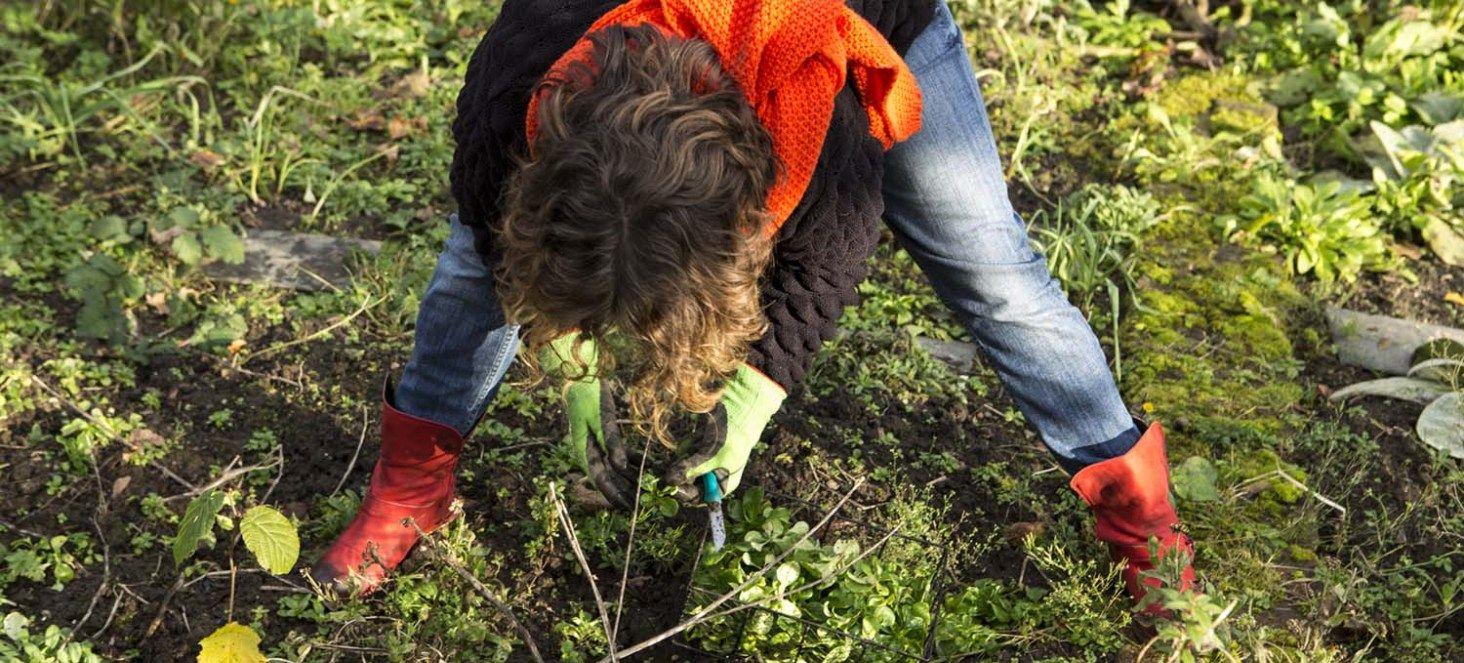 Rund ums Jahr eigenen Salat ernten - erprobter Anbauplan #beetanlegen