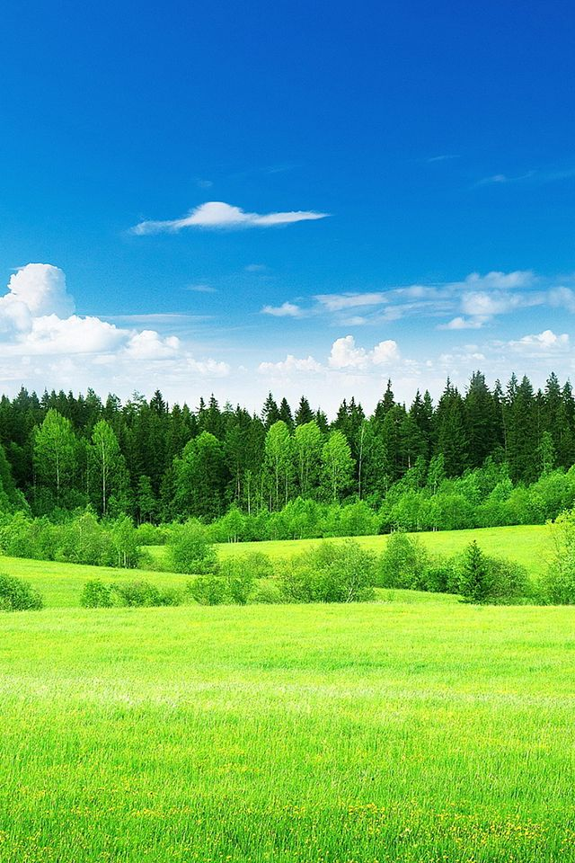 Open Field Wallpaper Nature Grass Iphone Wallpaper