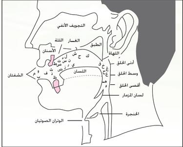 مخارج الحروف Learning Arabic Arabic Words Holy Quran