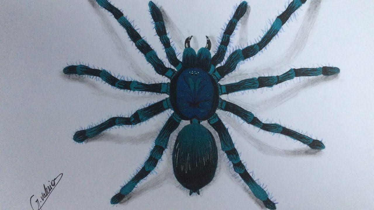 Comment Dessiner Une Araignée Réaliste Speed Drawing 3d Araignee