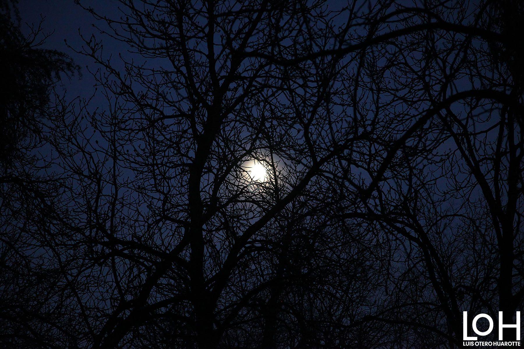 Luna escondida, #Fotografía de Luis Otero Huarotte  #photography #hidingmoon #moon #luna #lunallena #lunallena🌕 #nightsky #cielonocturno #arbol #tree #branches #ramas #nocturno #naturaleza #nature #noches #night #noche #fullmoon