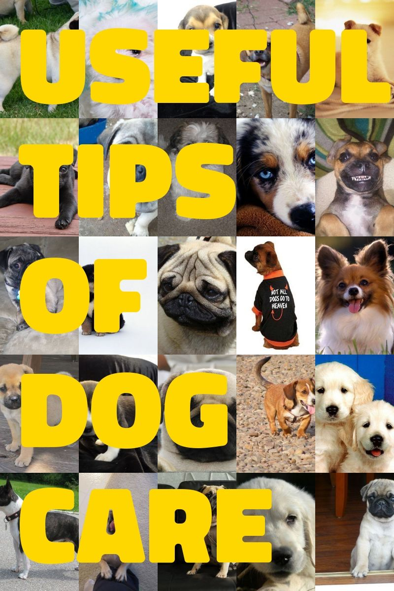 Tips On Dog Care That Will Help | Dog care, Pet care dogs ...
