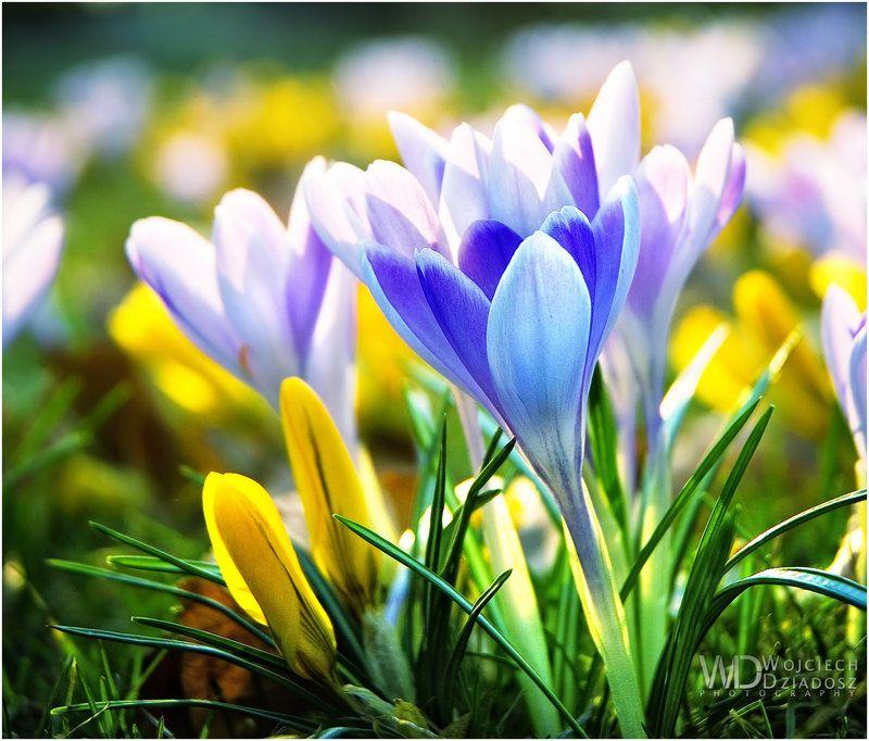 Immagini desktop alta risoluzione la primavera una for Immagini per desktop natura
