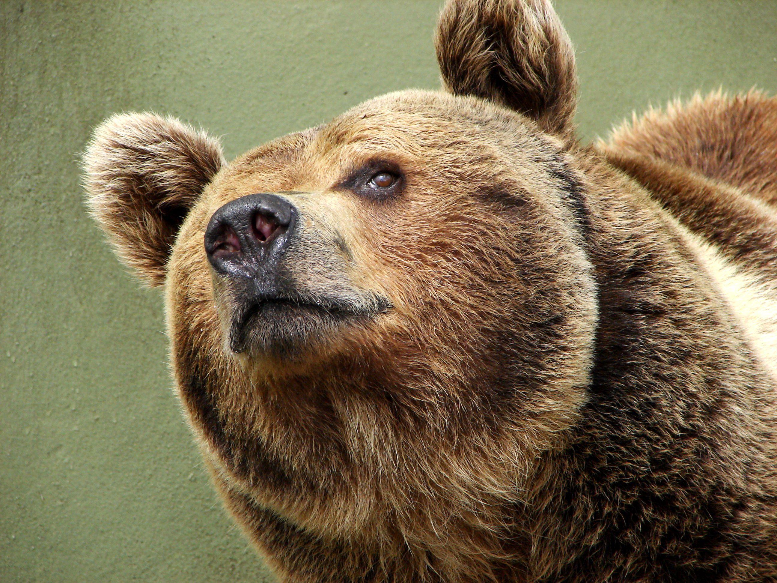 L'Oreal to help with Polar Bears Funny bears, Bear meme