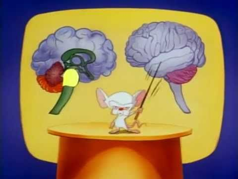 Pinky and the brain the brainstem song parts of the brain in a pinky and the brain the brainstem song parts of the brain in a totally entertaining clip from a cartoon classic thanks youtube ccuart Gallery