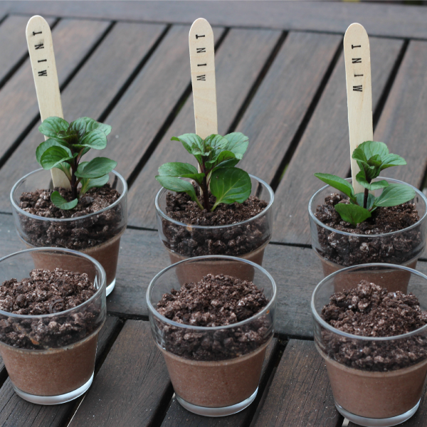Dirt Cake With Mint Oreos