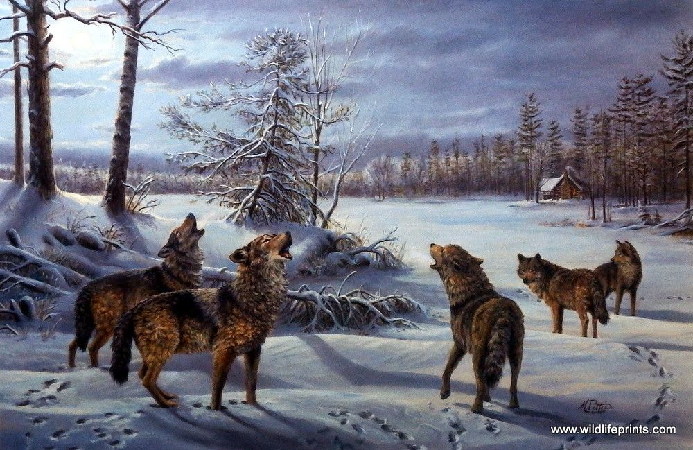 Mary Pettis Moonlight Chorus Wolf Pictures Wolf Photos Wolf Howling