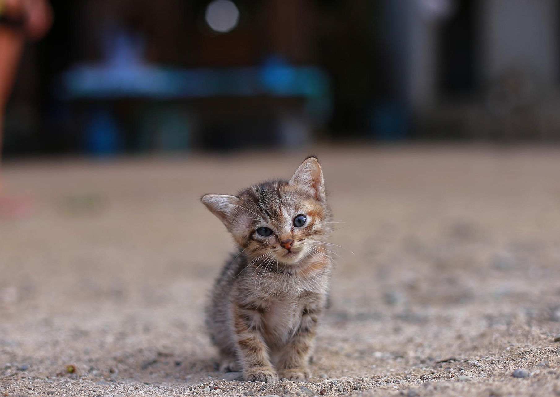 Cute Cats Wallpapers Wallpaper 1810×1283 Cute Cat Picture