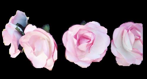 Flower Crown | edits ;* | Pinterest | Flower crowns