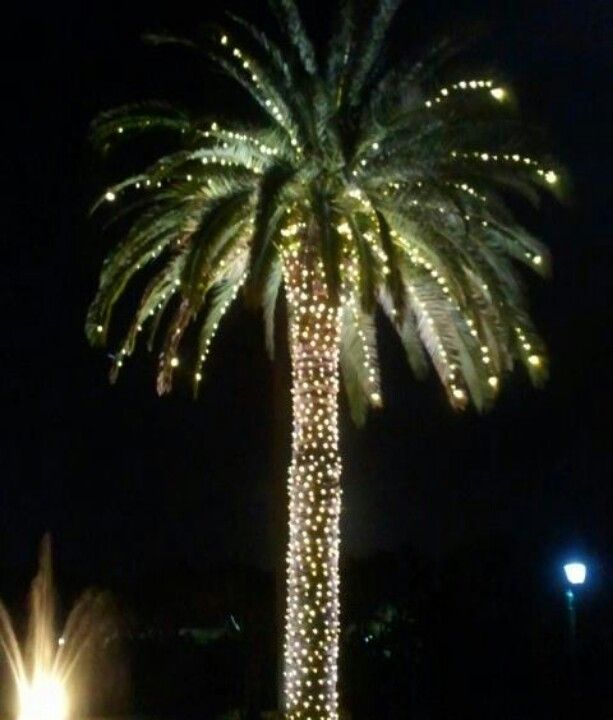 lighted palm tree beautiful