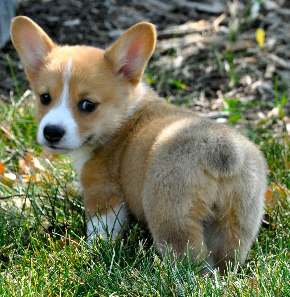The Ten Most Adorable Dog Breeds On The Planet Cute Animals