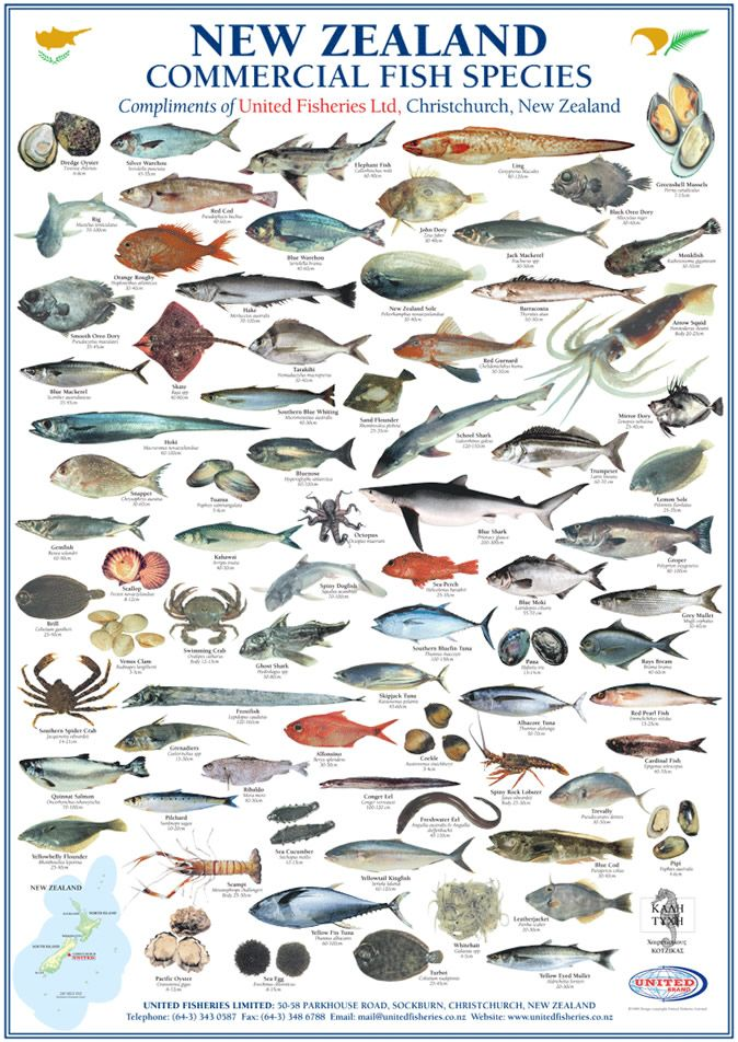 New zealand commercial fish species united fisheries kitchen new zealand commercial fish species united fisheries sciox Gallery