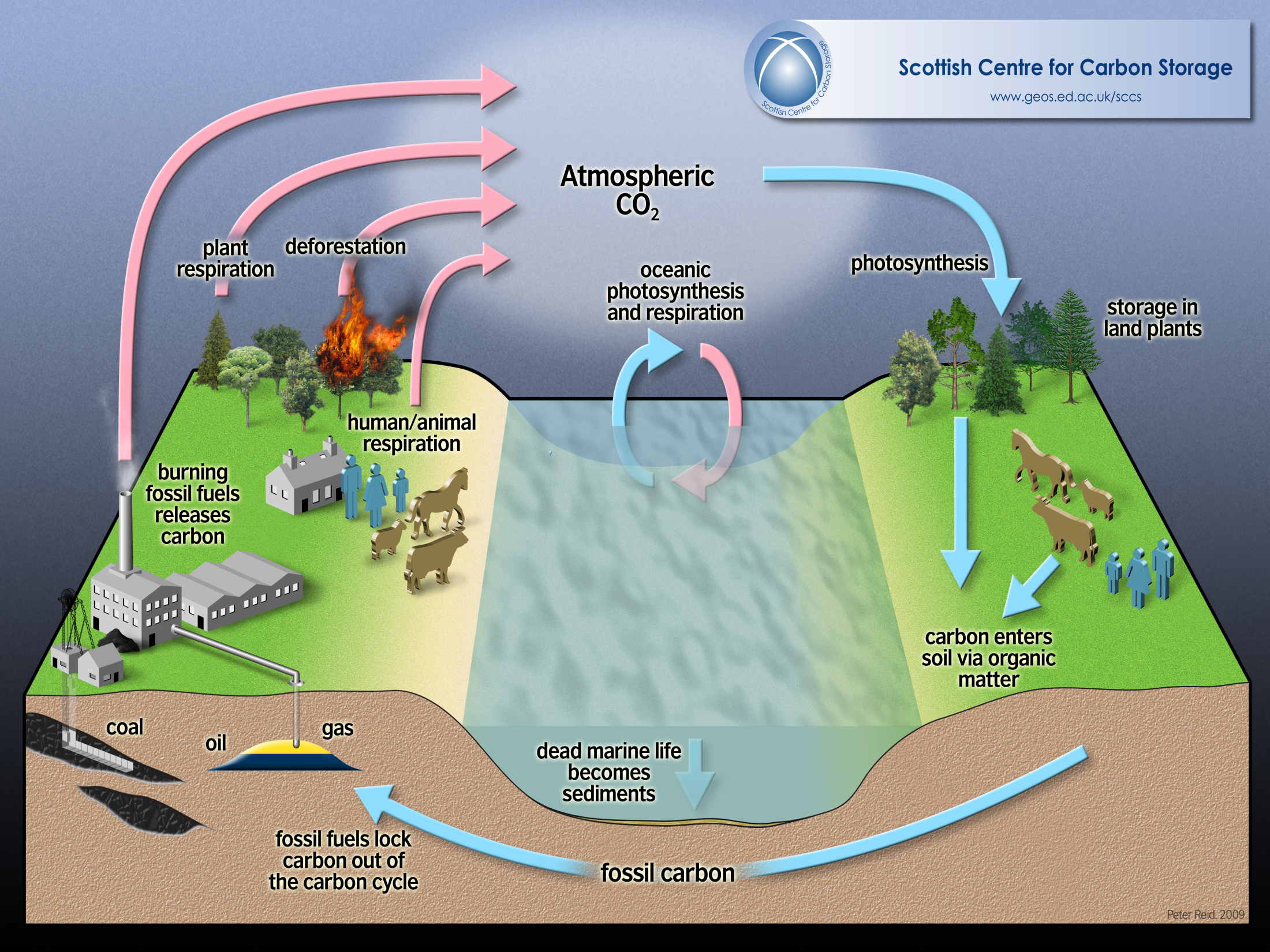 simplified sinks and sources of the carbon cycle climatology Carbon Sinks List by Size