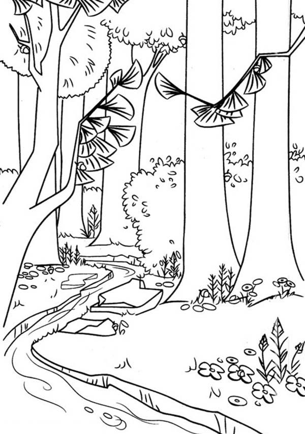 Timber National Forest In Open Season Coloring Pages Bulk Color Forest Coloring Book Coloring Pages Forest Coloring Pages
