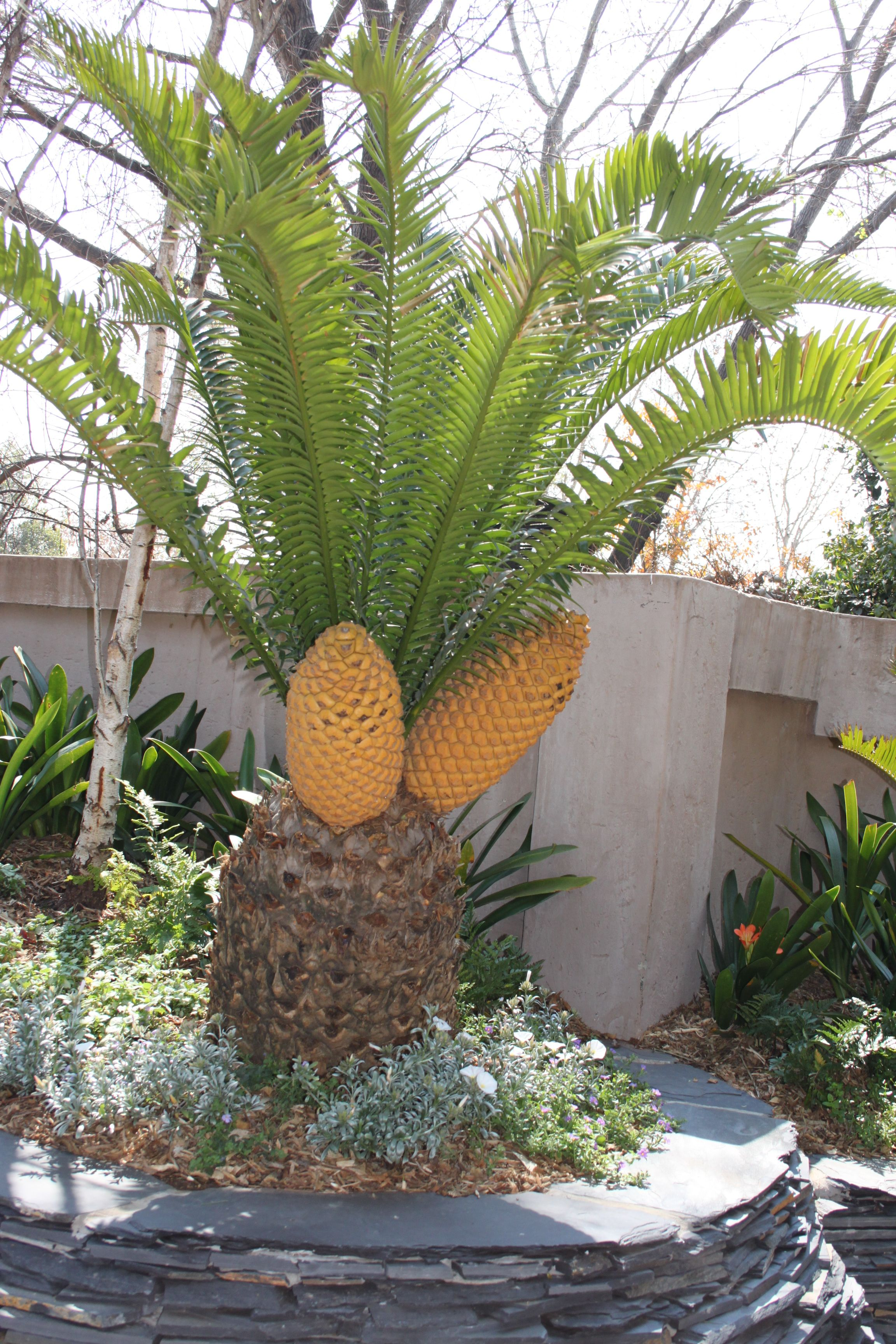 Palms And Breads On Pinterest