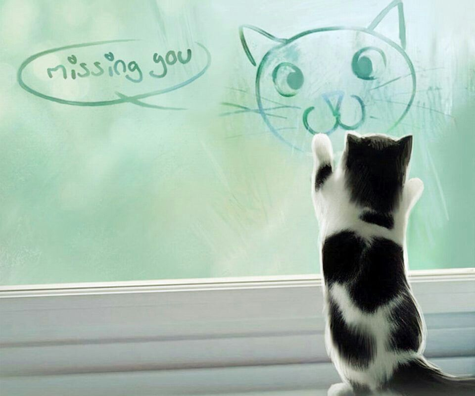 Missing You Yien Cat Memes Kittens Funny Cat Wallpaper