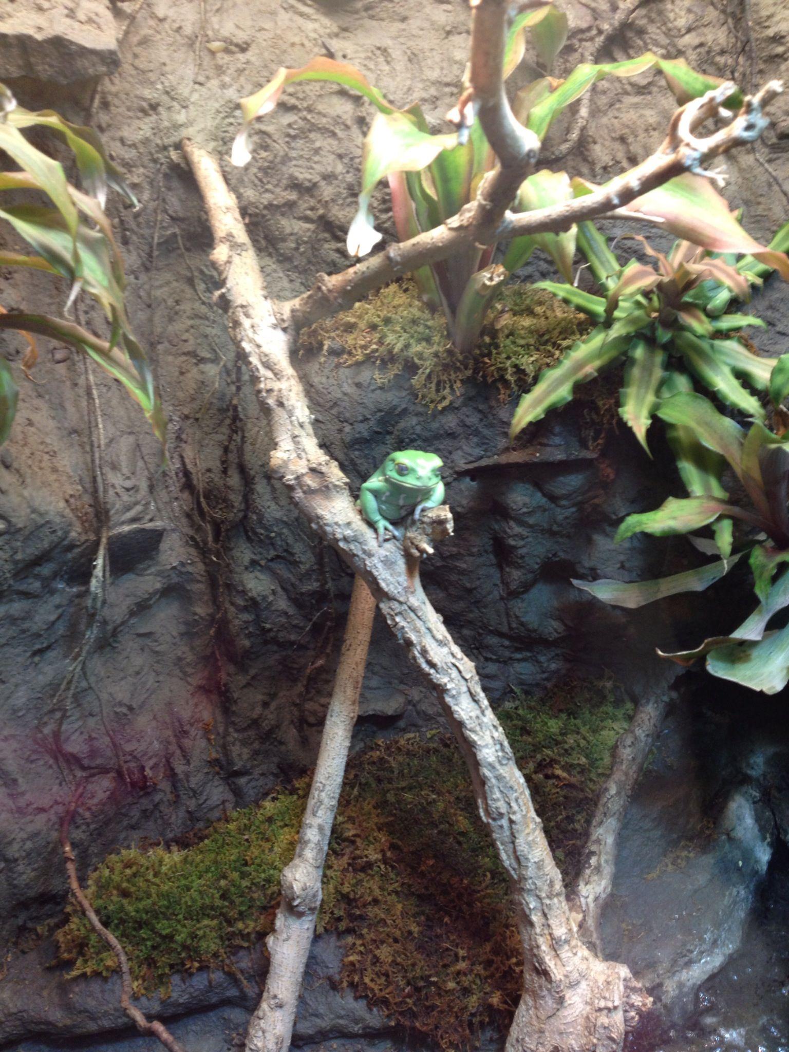 Live Frogs at the Georgia Aquarium in Atlanta
