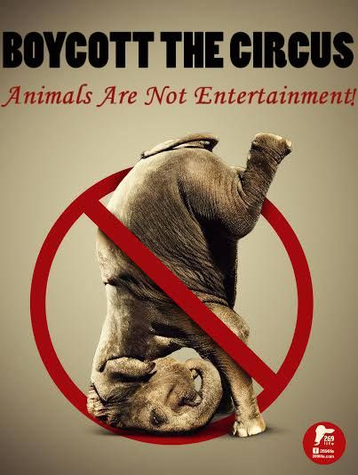 Animals do not belong to the circus. banthecircus