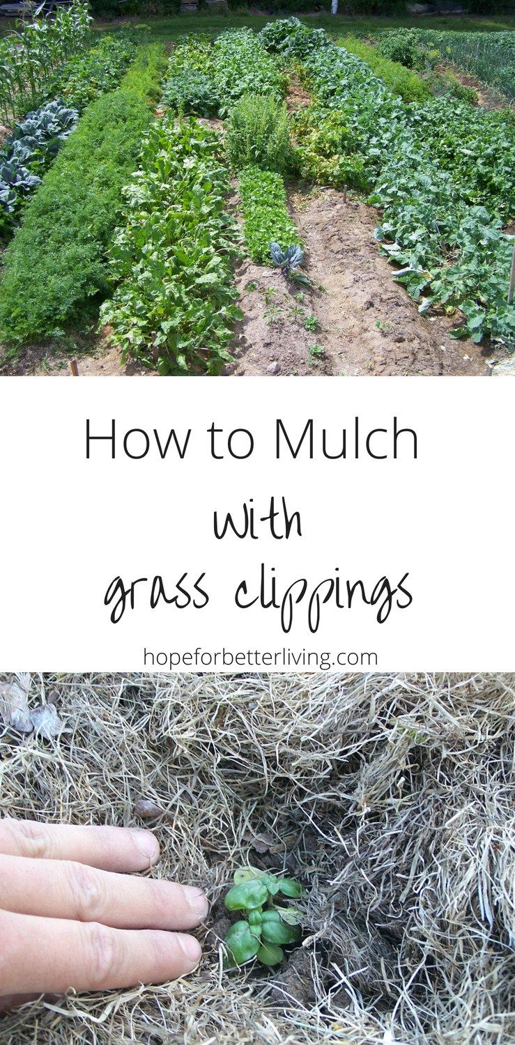 How To Mulch With Grass Clippings Fall Garden Vegetables