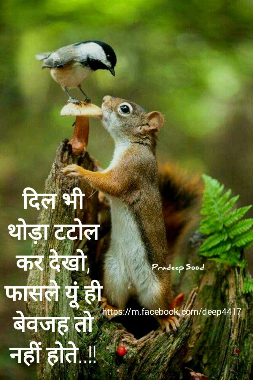 Pin By Vikram H On Hindi Quotes हद वचर Animals