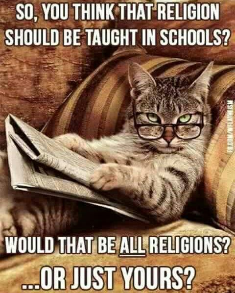 And Which Books Do You Think Should Be Burned The Ones You Like Or The Ones I Like Animals Funny Animal Pictures Funny Cats