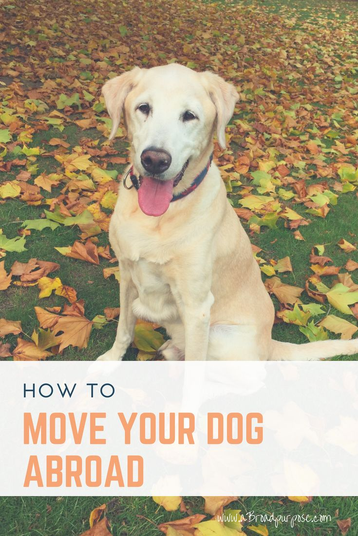 How to Move Your Dog Abroad Fear of flying, Your dog, Dogs