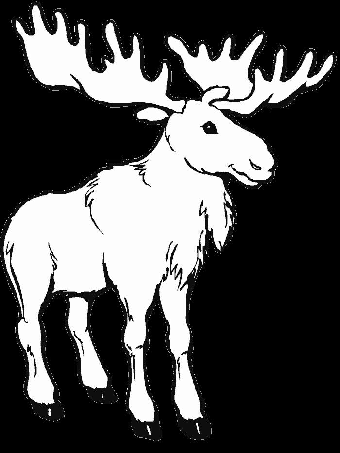 Caribou 3 Animaux Ndash Coloriages A Imprimer Coloriage