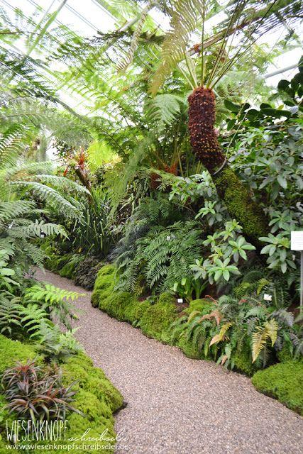 Baumfarn Botanischer Garten Munchen Botanischer Garten Munchen Botanischer Garten Tropische Garten