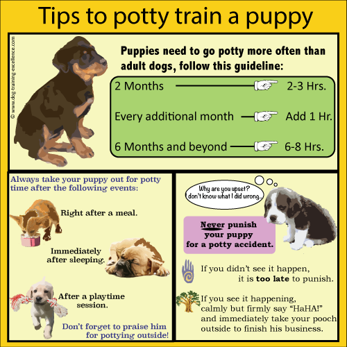 Want to Potty Train Your Dog FASTER?