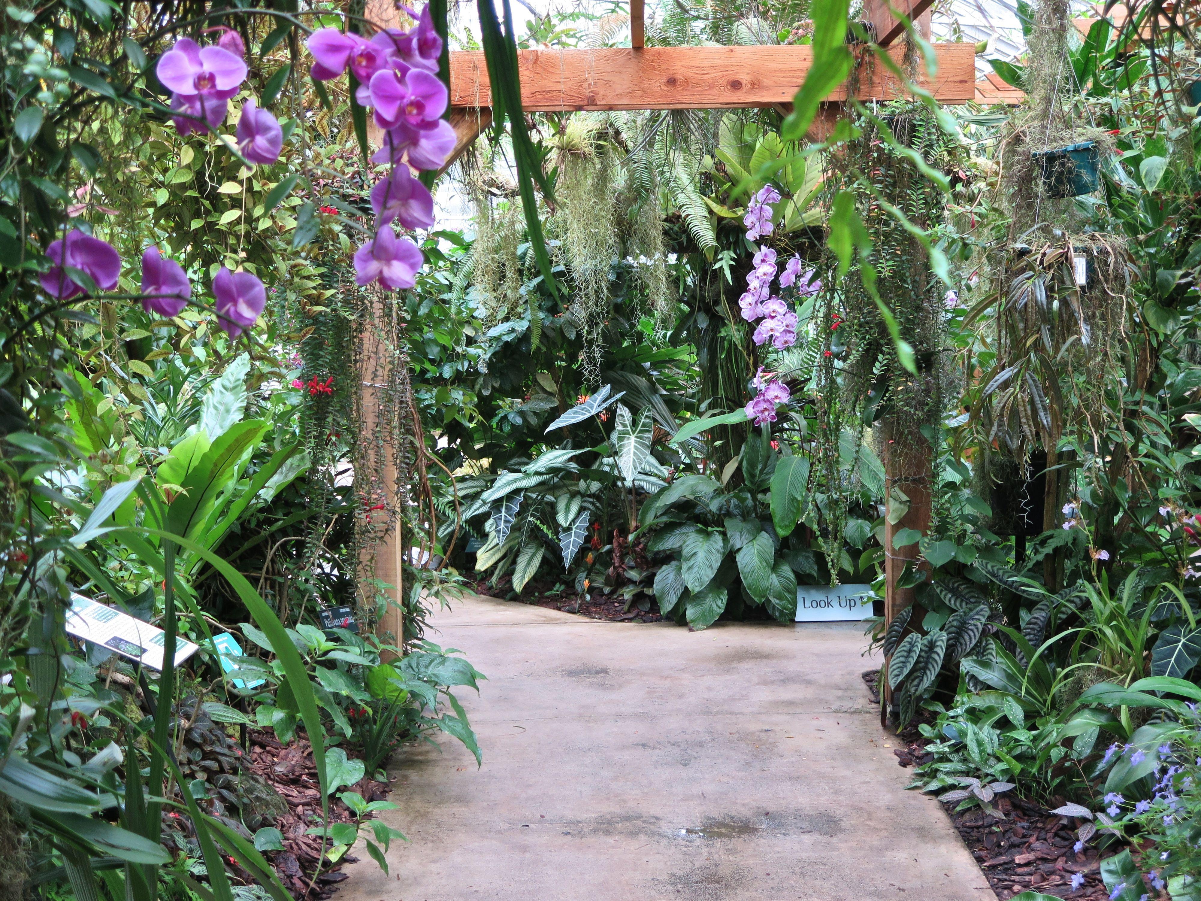 Orchid Greenhouse At Marie Selby Botanical Gardens In Sarasota Florida Botanical Botanical Gardens Plants