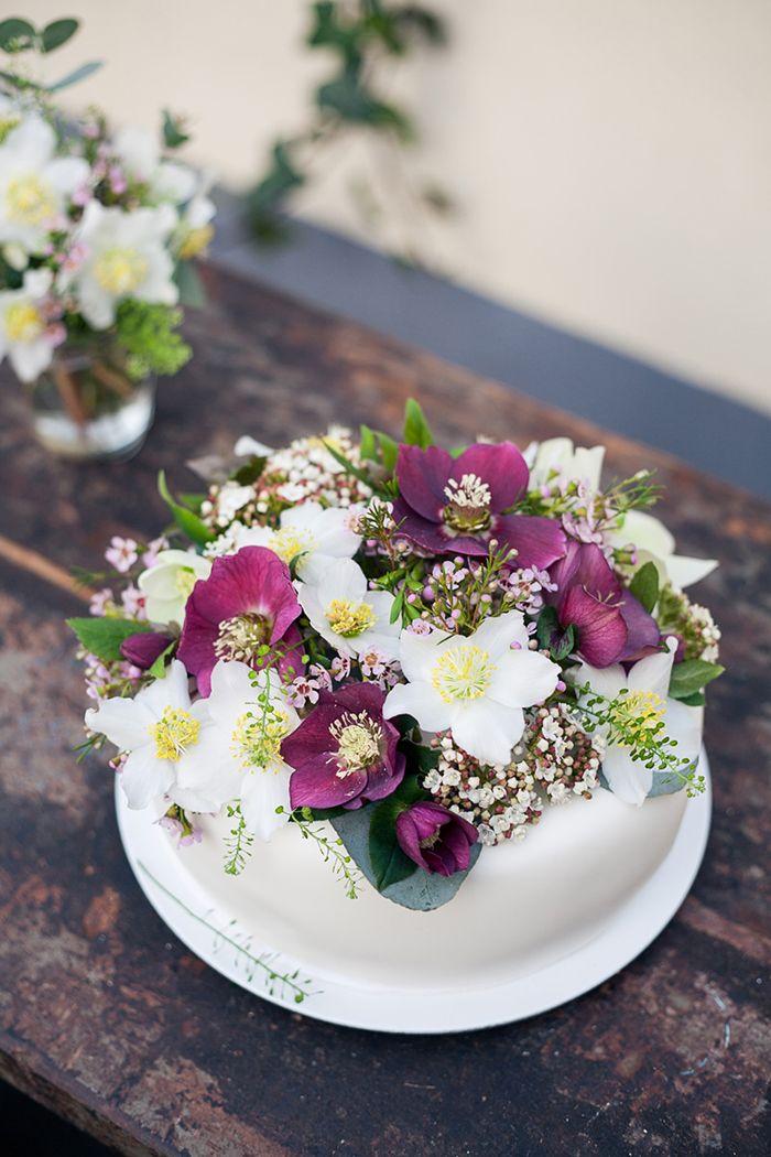 Blume Des Monats Januar Christrose Purple Wedding Pinterest