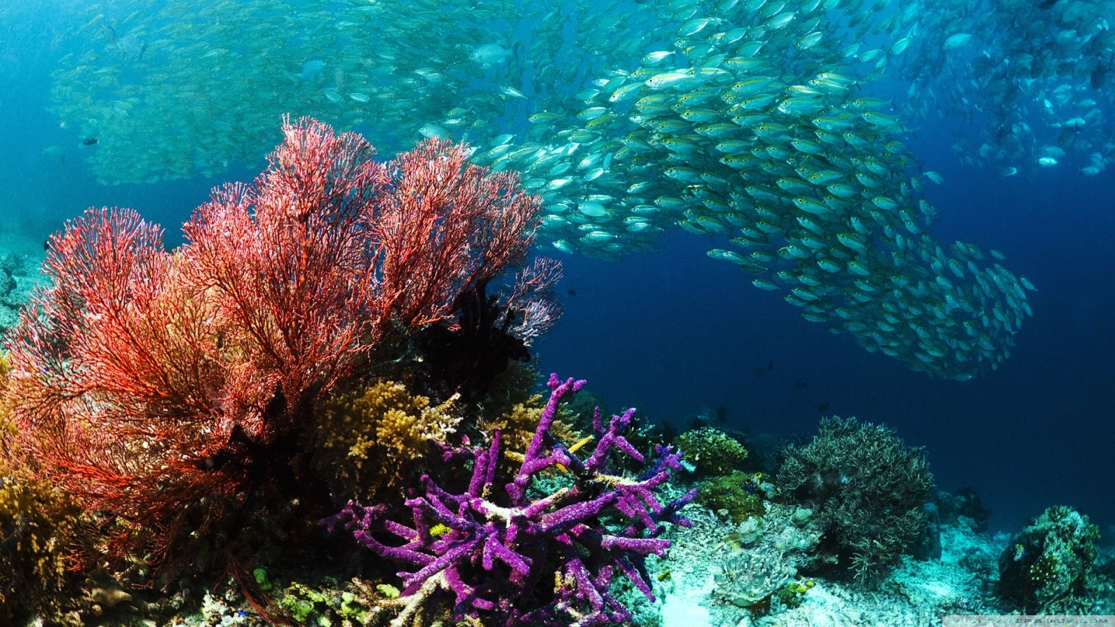 15 Pics Of Amazing Coral Reefs And Fishes Mostbeautifulthings Underwater Wallpaper Ocean Underwater Ocean Images Ocean underwater life fish corals algae
