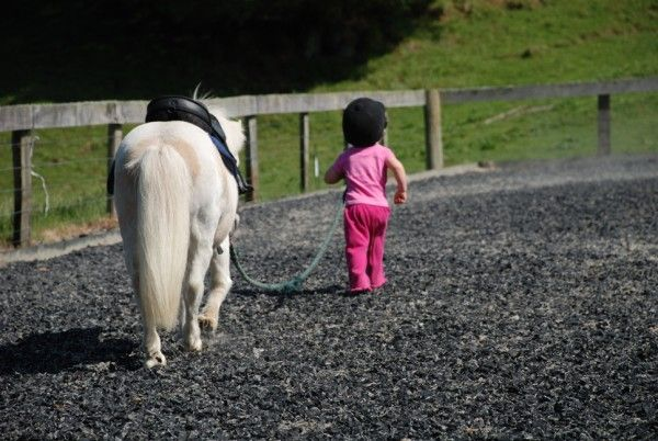 Helen Mandeno from Te Awamutu won this week with her wonderful photo of Ella and Snowy. Ella is 2 years old and Snowy is 8hh and worth his weight in gold.