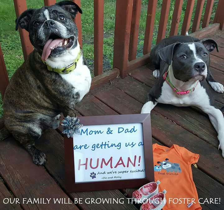 Image result for foster care announcement