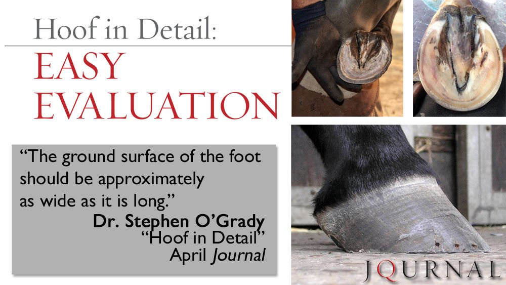 Learn All About Your Horse S Hoof For Free In This Month S Issue