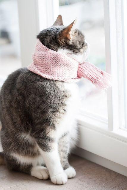 Priessnitz şal, kedilerde boyun bandajı