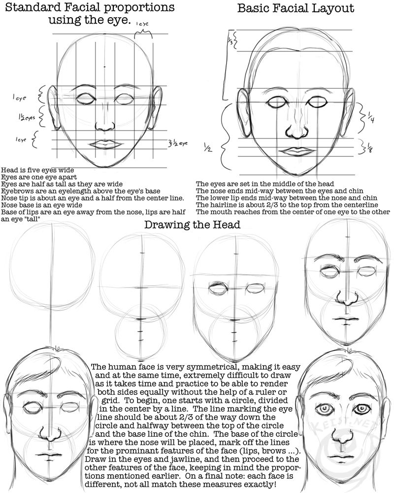 Facial_Proportions_Worksheet_by_lantairvlea.jpg (800×1000)