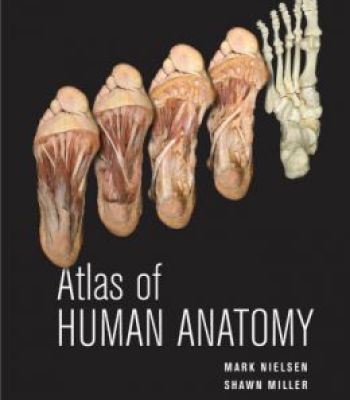 keith moore clinical anatomy pdf