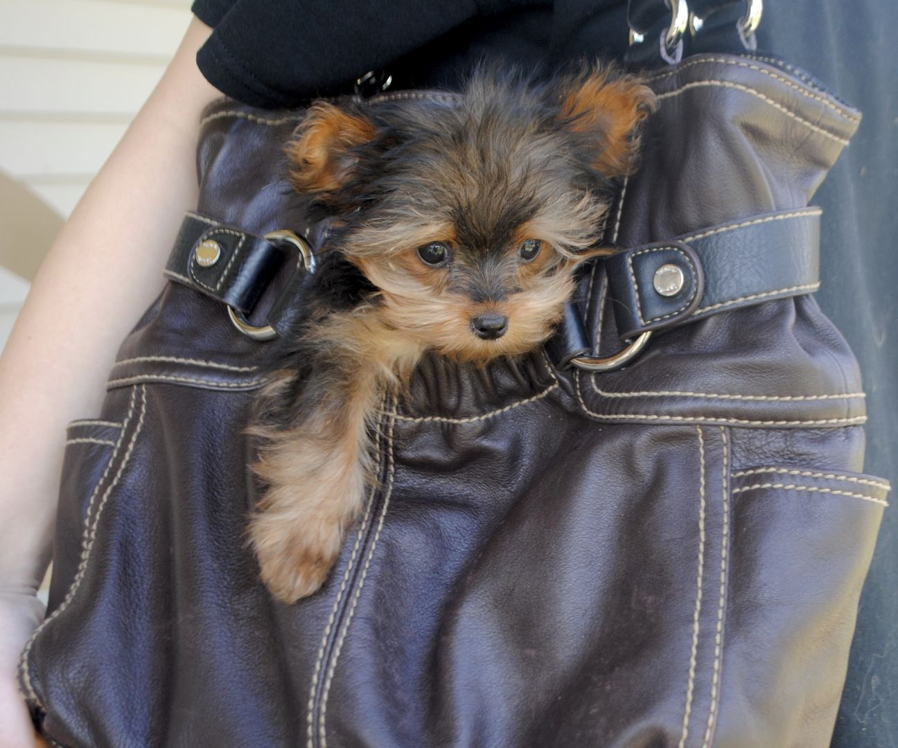 Pin by Dreamcatcher Hill Puppies and on Adorable Puppies