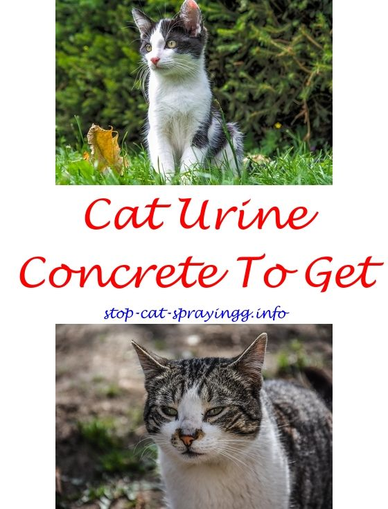 Cat Pee Out Of Couch Baking Soda Cat Urine Remover Cat Urine And Cat