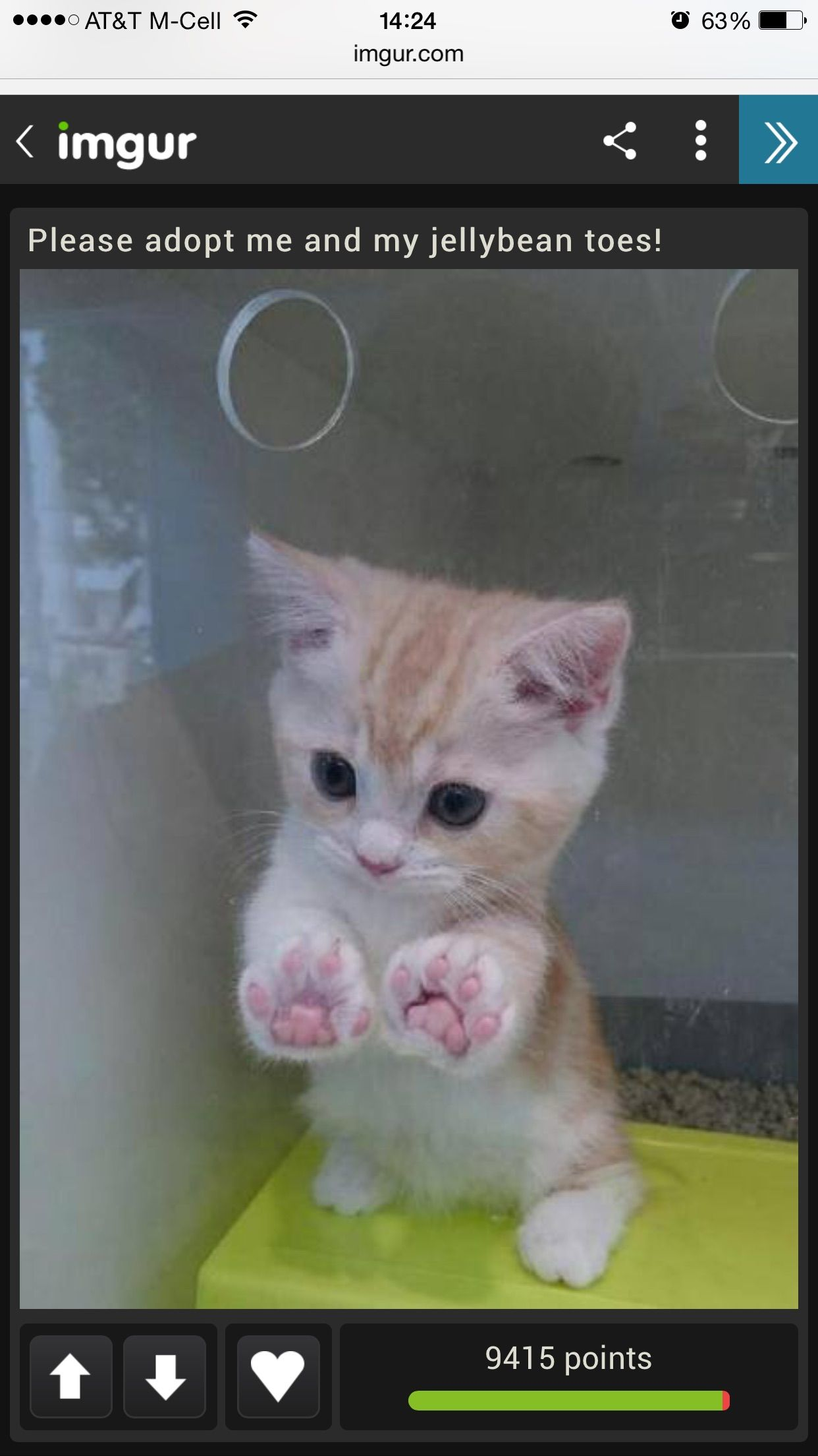 Look At Those Jelly Bean Toesies I Just Wanna Chew Em Cute Animals Cats And Kittens Baby Animals